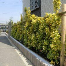 緑あふれるガーデンエクステリア NO.35の施工写真2
