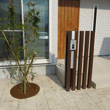 スタンプコンクリートの中に樹木を植えて NO.577の施工写真