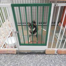 フェンスで作った愛犬の遊び場用スペース NO.598の施工写真メイン