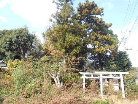 植栽を伐採伐根 NO.781の施工前写真2