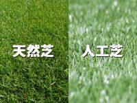 天然芝と人工芝の違いは?それぞれのメリットとデメリット